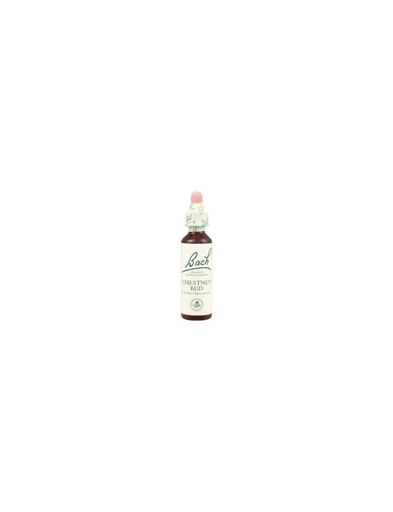 Chesnut bud - bourgeons de maronnier blanc - aesculus hippocastanum