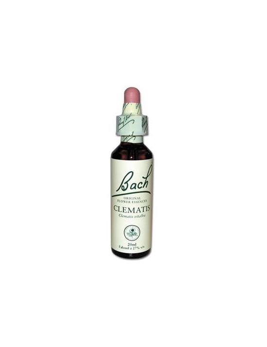 Clématis - clématite - clematis vitalba