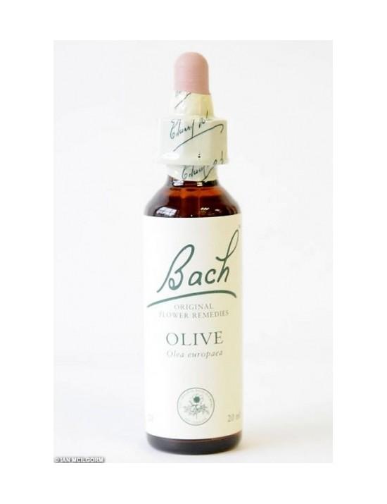 Olive - Olivier - olea europaea            1