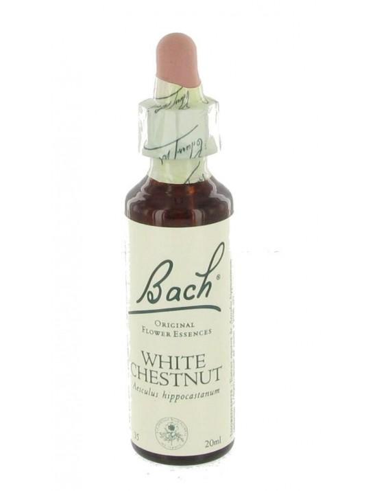 White chesnut - marronnier blanc - aesculus hippocastanum