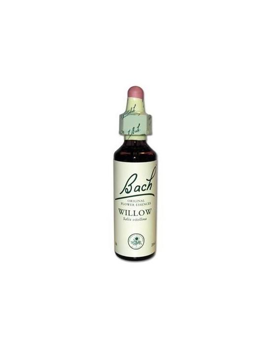 Willow - saule - salix vitellina                          stk1
