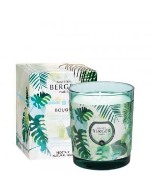 Bougie parfumée Fraicheur eucalyptus collection Immersion - Maison Berger